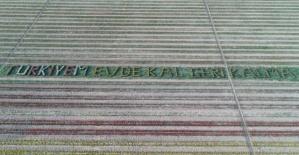 """Konya'da lalelerle """"Evde Kal Türkiye"""" mesajı"""