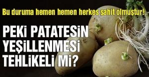 Patatesin çillenmesi, yeşillenmesi tehlikeli mi? Peki patatesin faydaları nelerdir?
